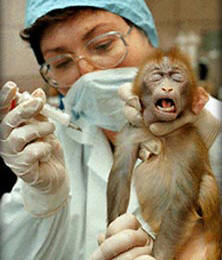 http://www.guiavegano.com.br/vegan/images/stories/animais/baby_monkey_injection.jpg